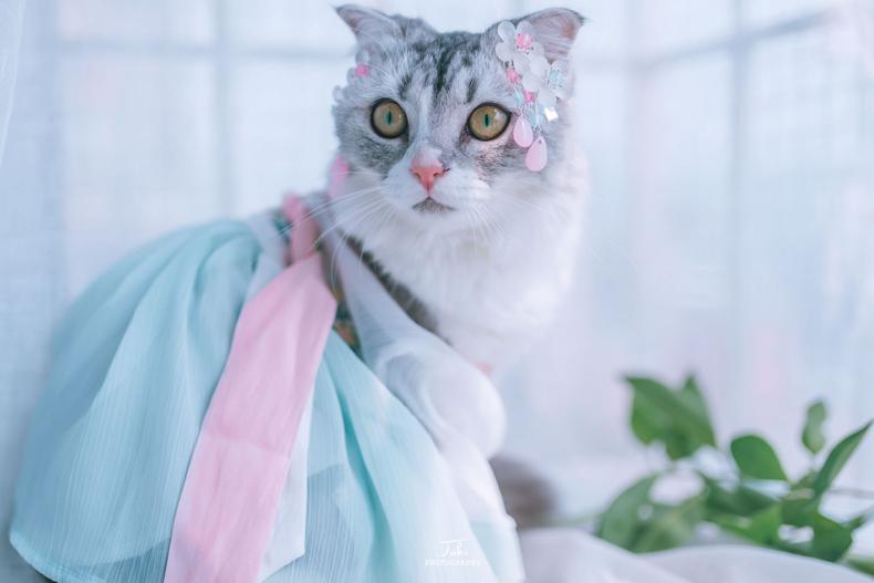 猫咪衣服狗狗汉服夏宠物裙子薄款